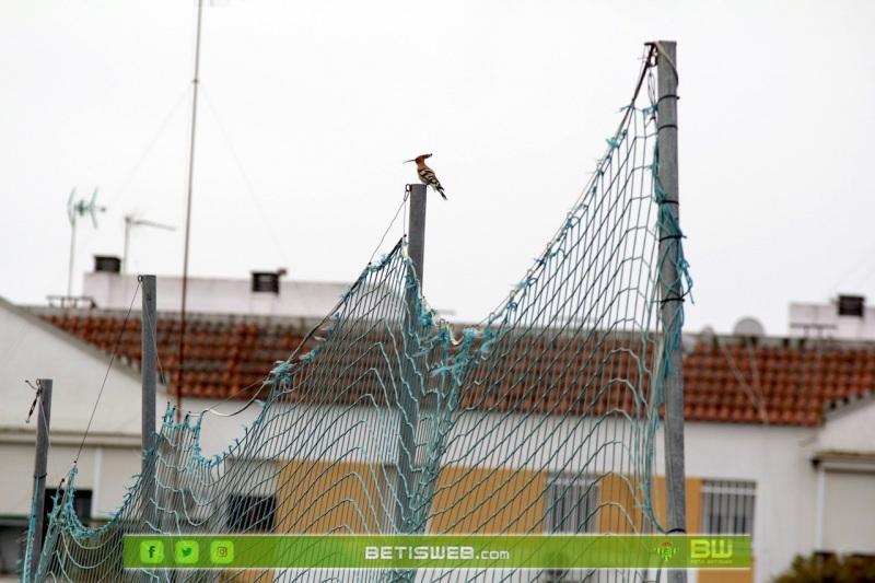 J16-–-Real-Betis-Fem-vs-Madrid-CFF33